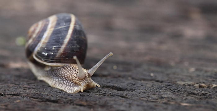 Learn the music industry slow like a snail